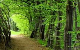 erdős kép